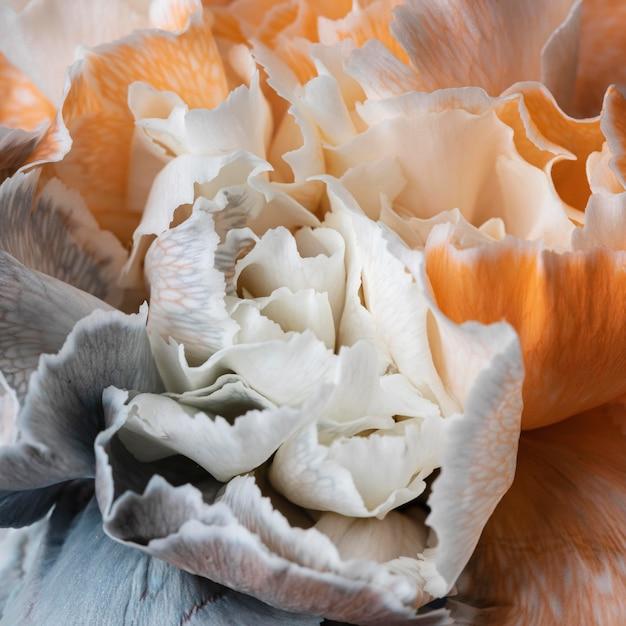 花が咲いた美しいクローズアップ 無料写真