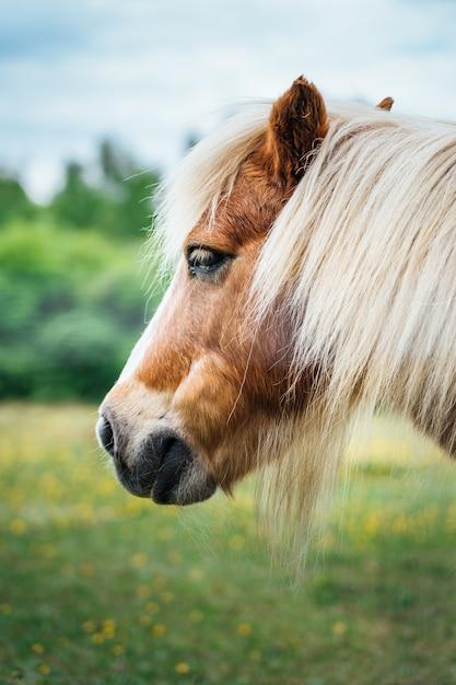 Красивый снимок головы коричневого пони со светлыми волосами крупным планом Бесплатные Фотографии