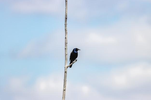 Bello primo piano di un pigliamosche blu del vecchio mondo su un ramo Foto Gratuite