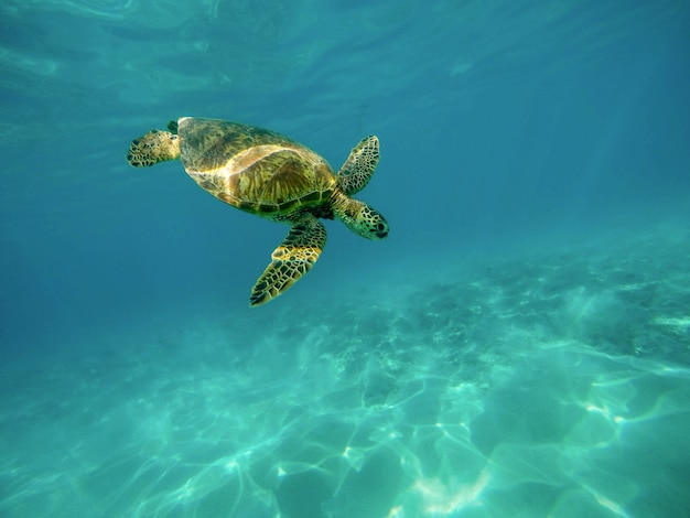 Beautiful closeup shot of a large turtle swimming underwater in the ocean Free Photo