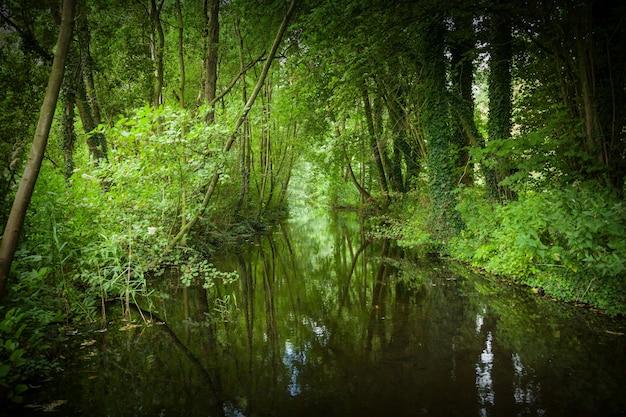 オランダ、ロッテルダムのクラリンセボス公園の湖の美しいクローズアップショット 無料写真