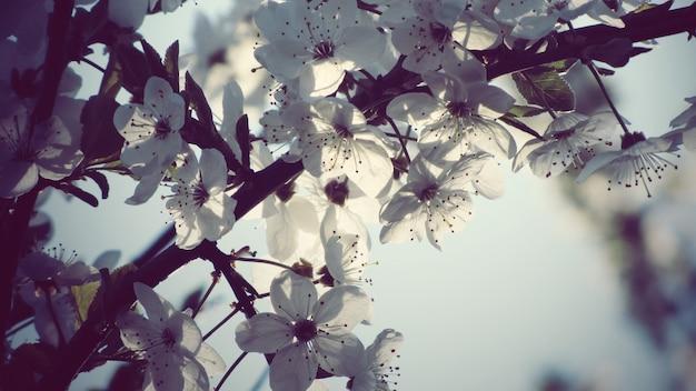 하얀 사과 꽃 꽃의 아름 다운 근접 촬영 샷 무료 사진