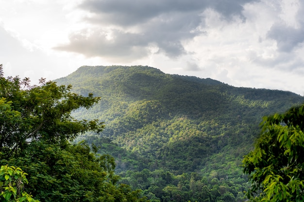 Beautiful cloudy sunset sky over the mountain and forest. Premium Photo