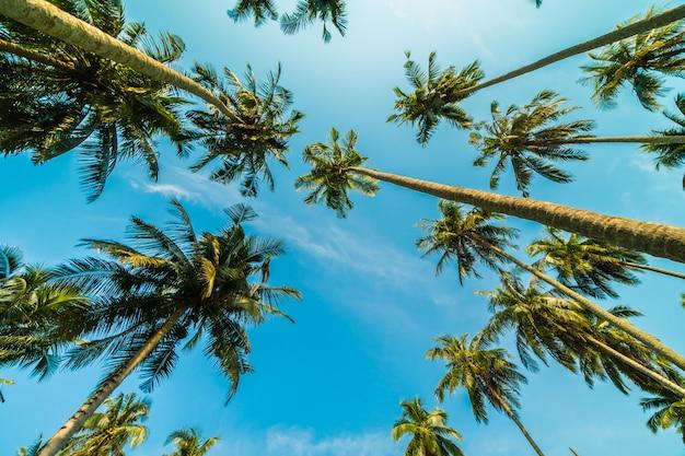 Beautiful coconut palm tree on blue sky Free Photo