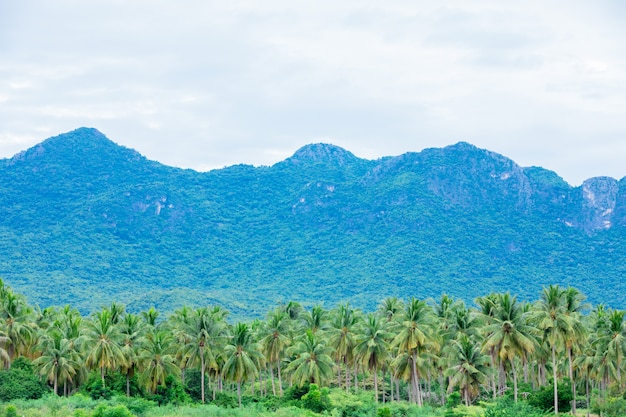 Beautiful coconut tree farms and mountains in thailand. Premium Photo