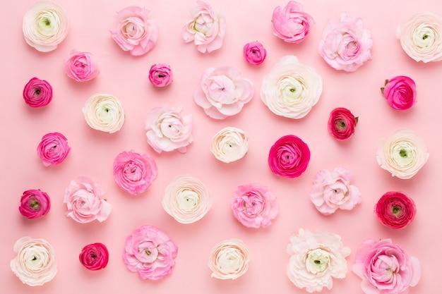 ピンクのテーブルに美しい色のラナンキュラスの花 Premium写真