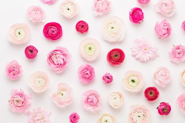 美しい色のラナンキュラスの花。 Premium写真