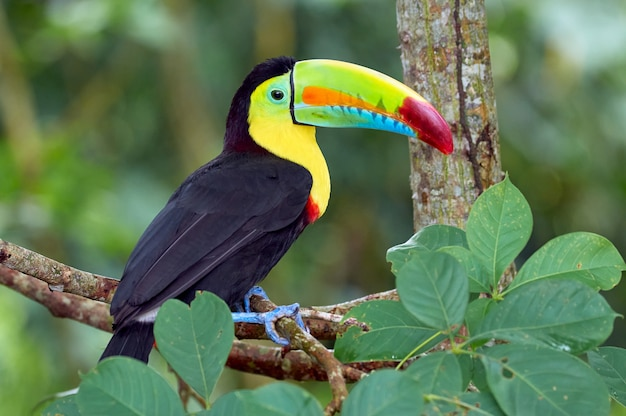 Beautiful and colorful bird perched on a tree Premium Photo