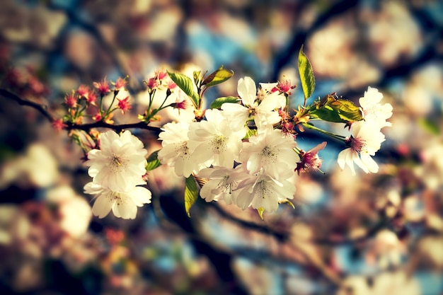 Beautiful Colorful Flower Background Blur Horizontal Spring