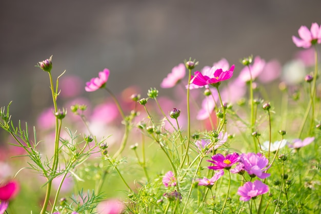 Beautiful colorful flower background. Free Photo