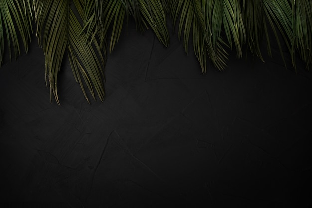 Beautiful composition of palm leaves with copyspace Free Photo