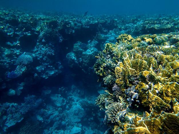 紅海の美しいサンゴ礁 Premium写真