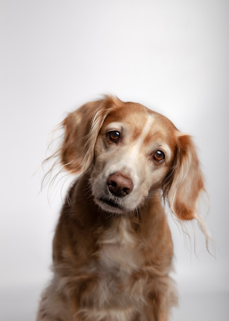 Beautiful cross breed dog with attention isolated against white Premium Photo
