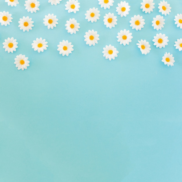 Beautiful daisies on blue background with copy space at the bottom Free Photo