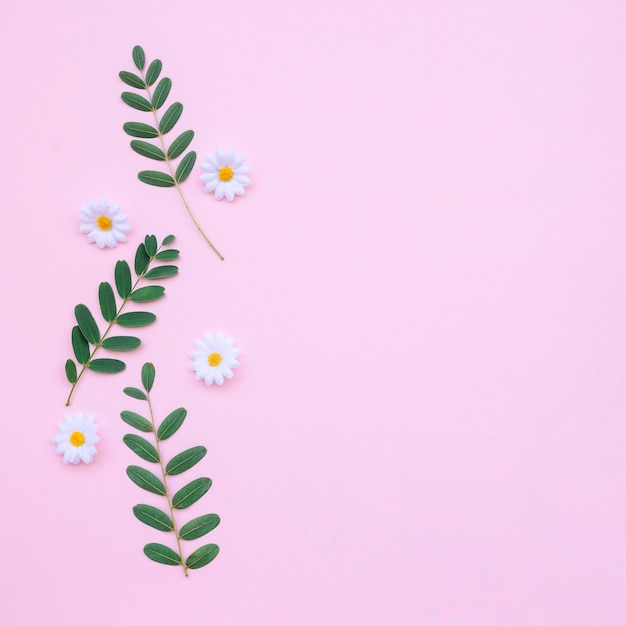 Beautiful daisies and leaves on light pink background Free Photo