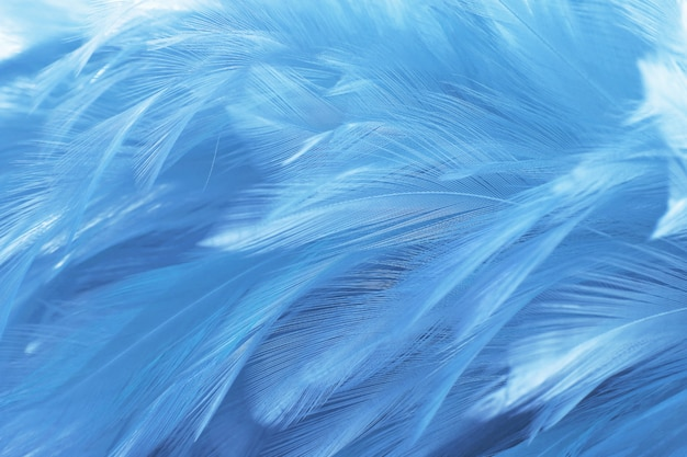 Beautiful dark blue feathers texture background. Premium Photo