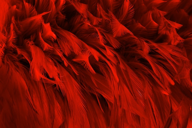 Beautiful dark red bird feathers pattern texture background. Premium Photo