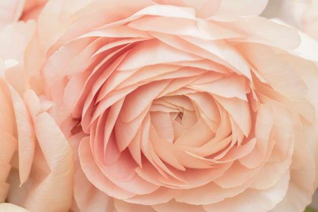 Beautiful delicate pink flower Premium Photo