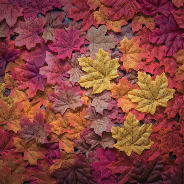 Beautiful densely scattered autumn maple leaves composition Free Photo