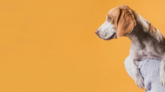 Красивая собака смотрит в сторону с копией пространства Бесплатные Фотографии
