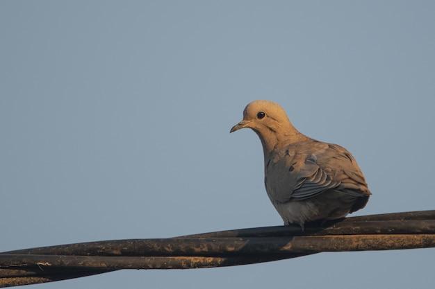 Красивый голубь сидит на деревянной ветке Бесплатные Фотографии
