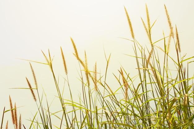 Beautiful dry grass in sunset on the mountain.rural scenery under shining sunlight. Premium Photo