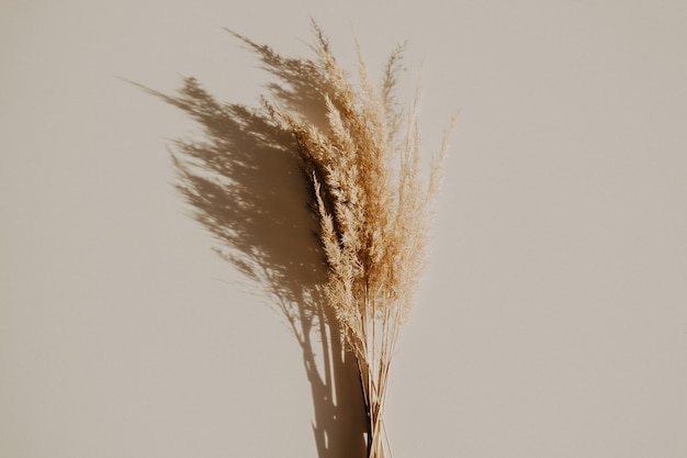 Beautiful dry reeds bouquet on white table. minimalism, trendy colors, blogger concept Premium Photo