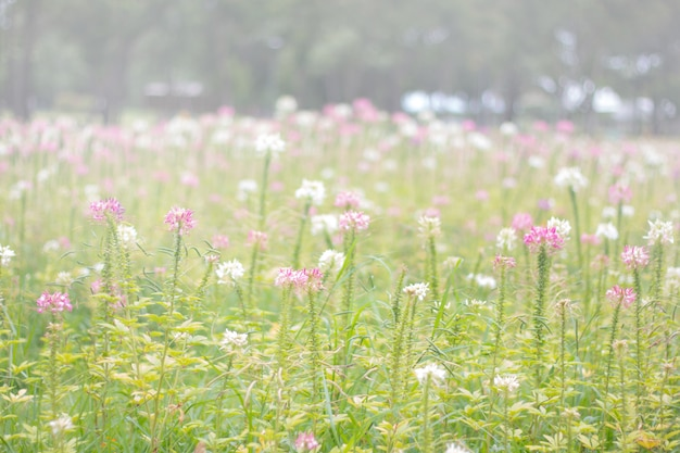 A beautiful field of flowers in the morning fog Premium Photo