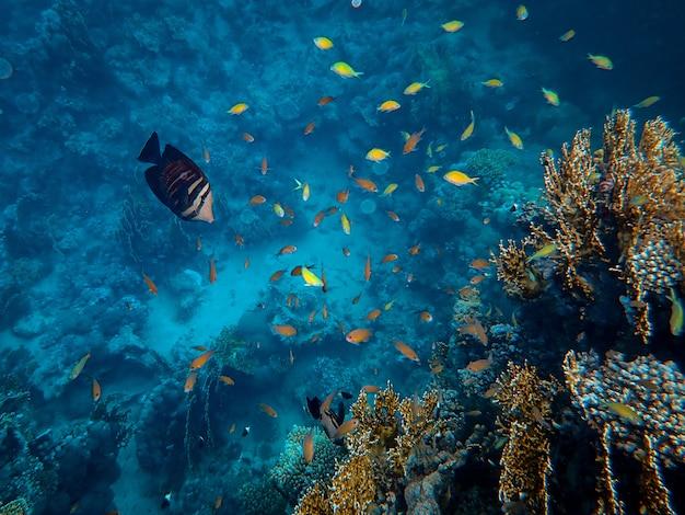 Beautiful fish swimming around corals under the sea Free Photo