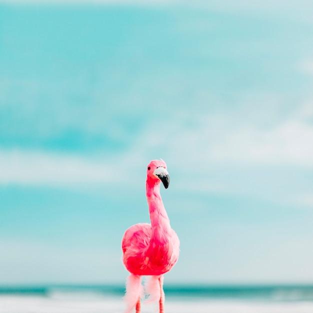 Beautiful flamingo in summer time Free Photo
