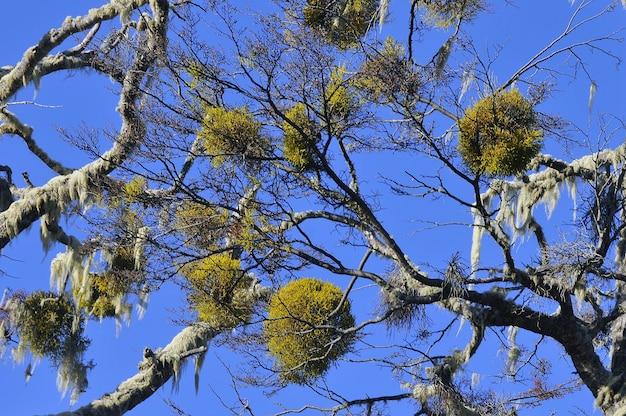 E la bellissima flora in patagonia durante il giorno Foto Gratuite