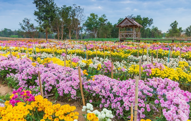 Красивые цветы в саду Premium Фотографии
