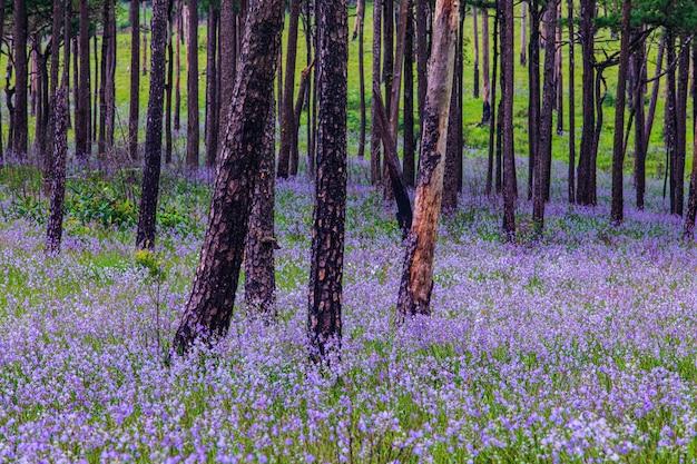 Красивые цветы в лесу Premium Фотографии