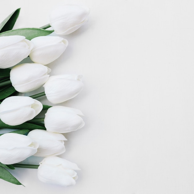 White tulip vectors photos and psd files free download mightylinksfo