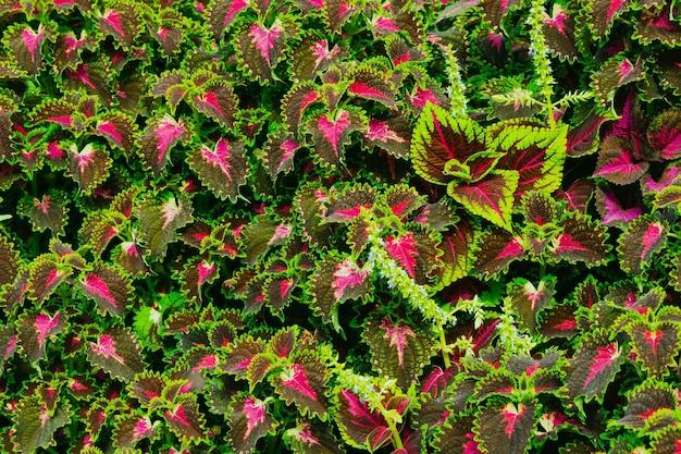 素晴らしい色の美しい花。 Premium写真