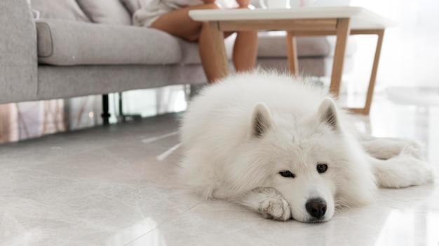 Bellissimo e soffice cane bianco Foto Gratuite