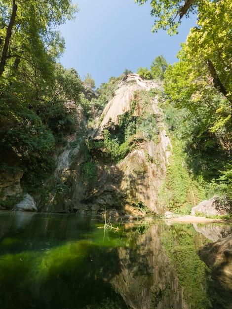 自然の中で美しい森 Premium写真