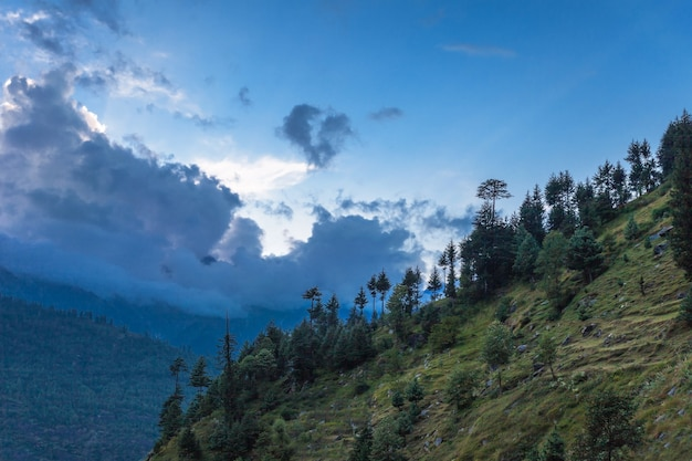 Beautiful forest, manali Premium Photo