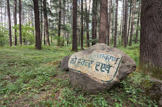 Beautiful forest, manali Premium Photo