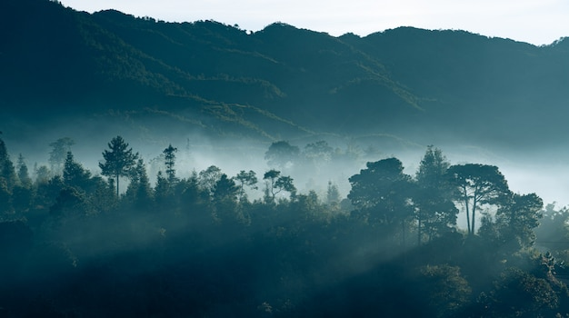 Beautiful forest in the mist in early morning Premium Photo
