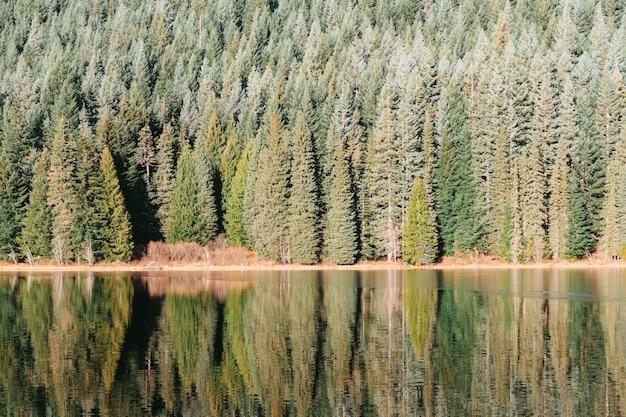 Красивый лес на берегу озера с отраженными в воде деревьями Бесплатные Фотографии