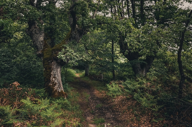 Beautiful forest with green tones in basque country Premium Photo