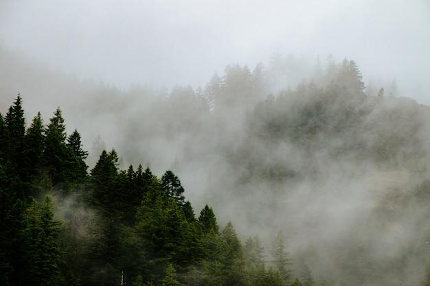 Красивые лесные горы в тумане Бесплатные Фотографии