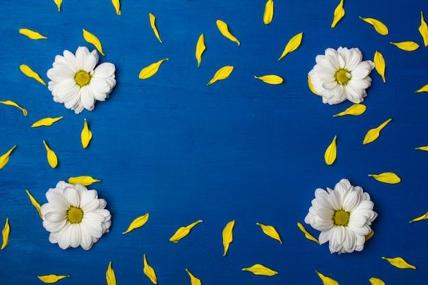 青い背景に白い菊と黄色の花びらの美しいフレーム。 Premium写真