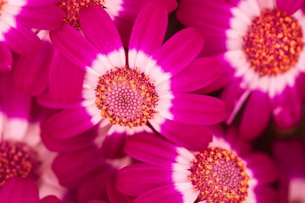 Beautiful fresh purple blossoms Free Photo