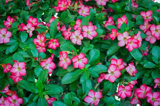 아름다운 신선한 붉은 진달래 꽃 프리미엄 사진