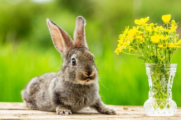 自然な緑の美しい面白い灰色ウサギ Premium写真