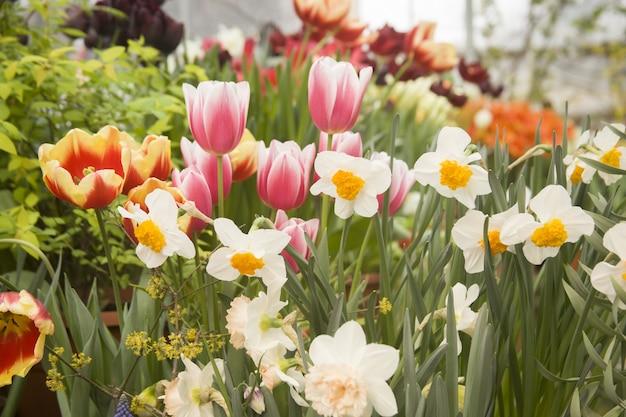 カラフルなチューリップと水仙の花のある美しい庭園 無料写真