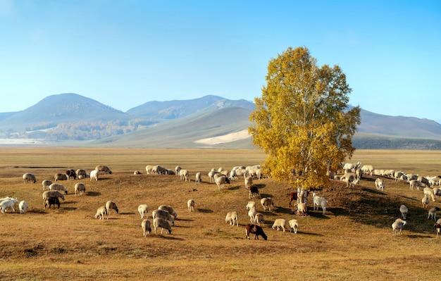 Beautiful grassland and flock Premium Photo
