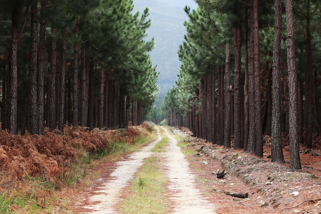 山々に続く森の背の高い木々を通る美しい砂利道 無料写真